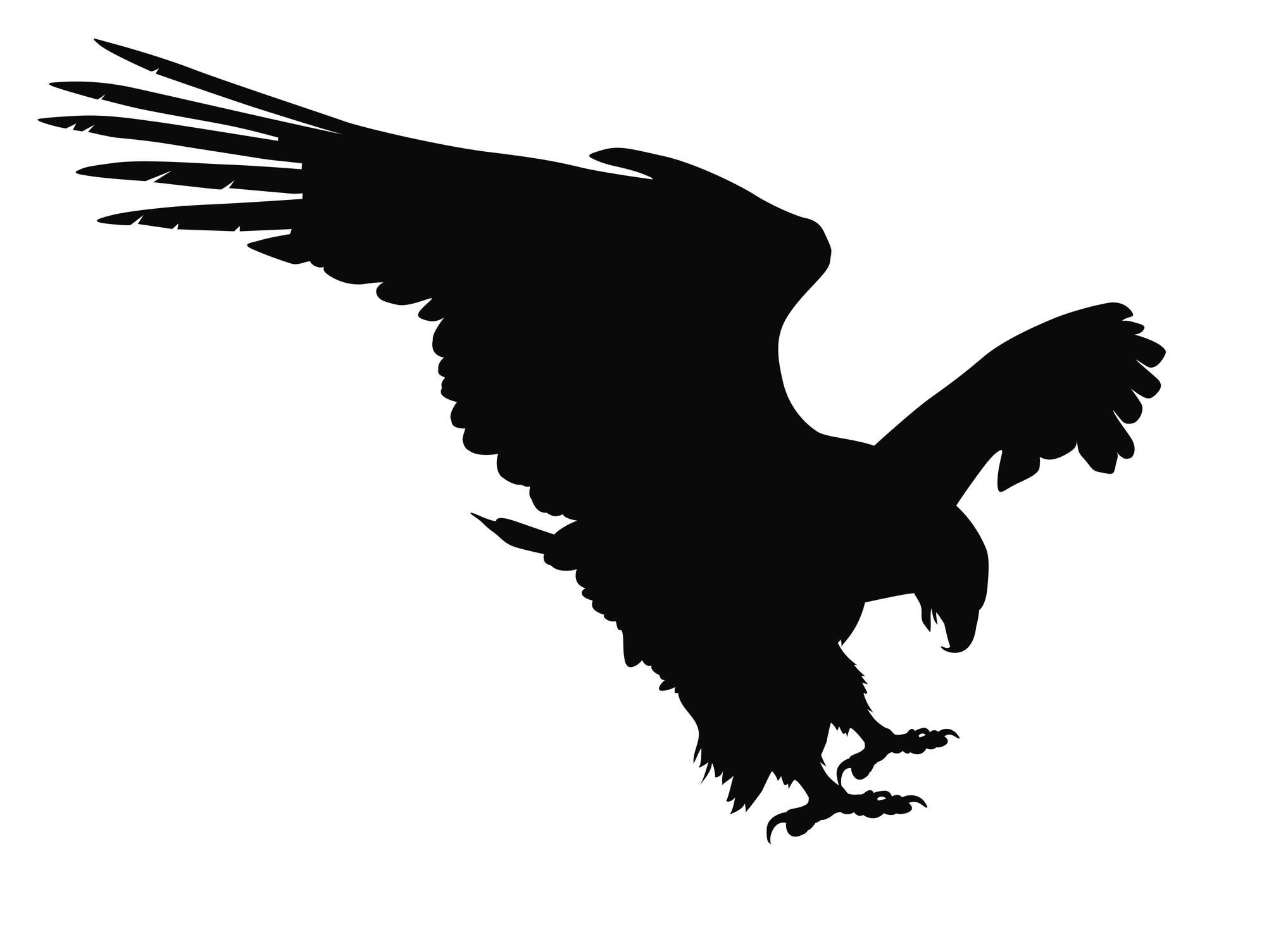 bird abatement sonoran desert falconry